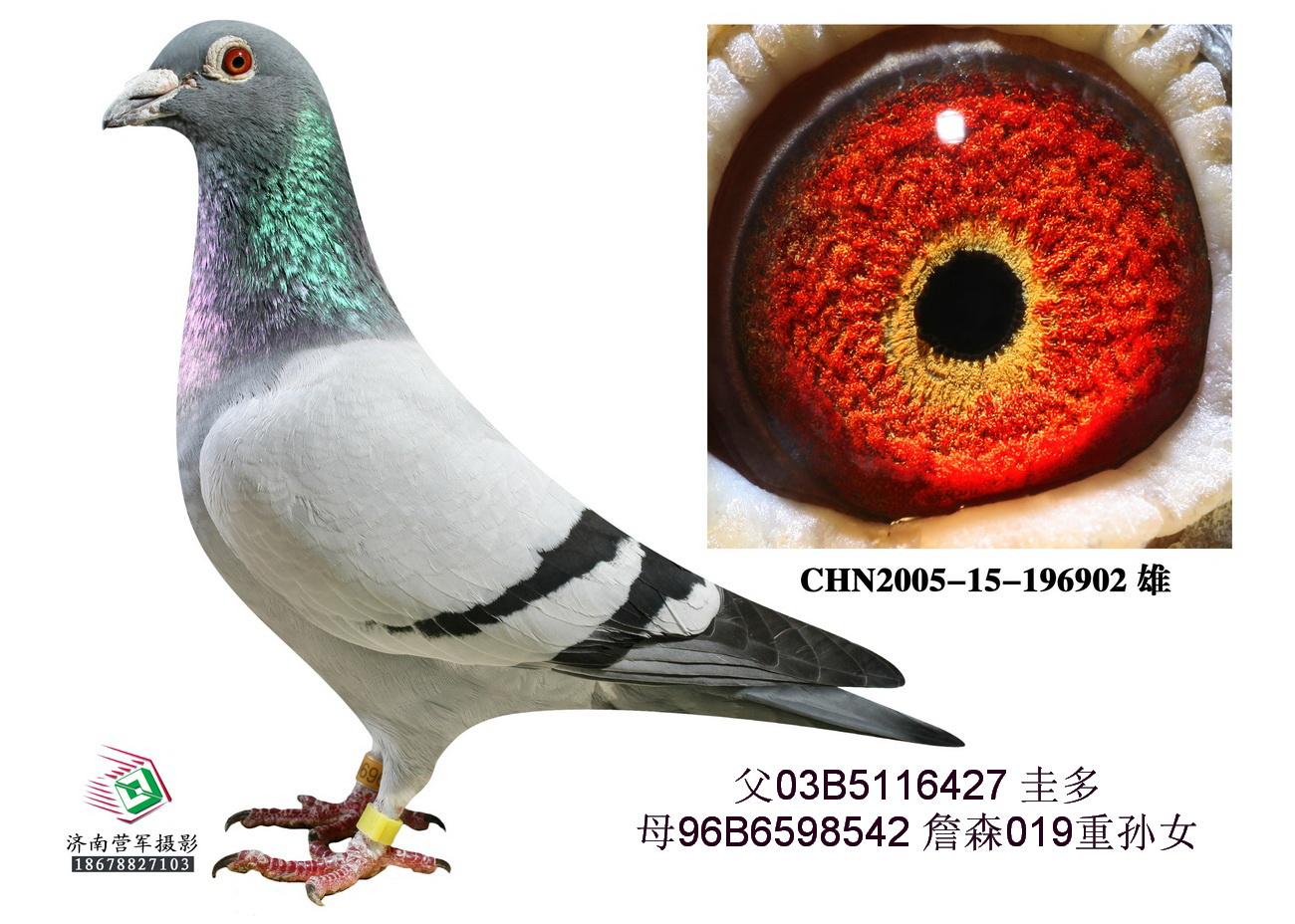 圭多902(非卖品)