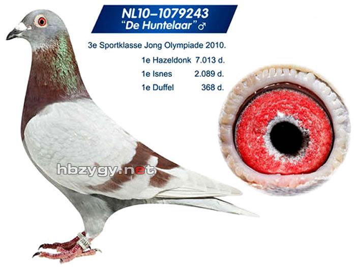 亨特拉尔号-奥林匹克幼鸽组季军