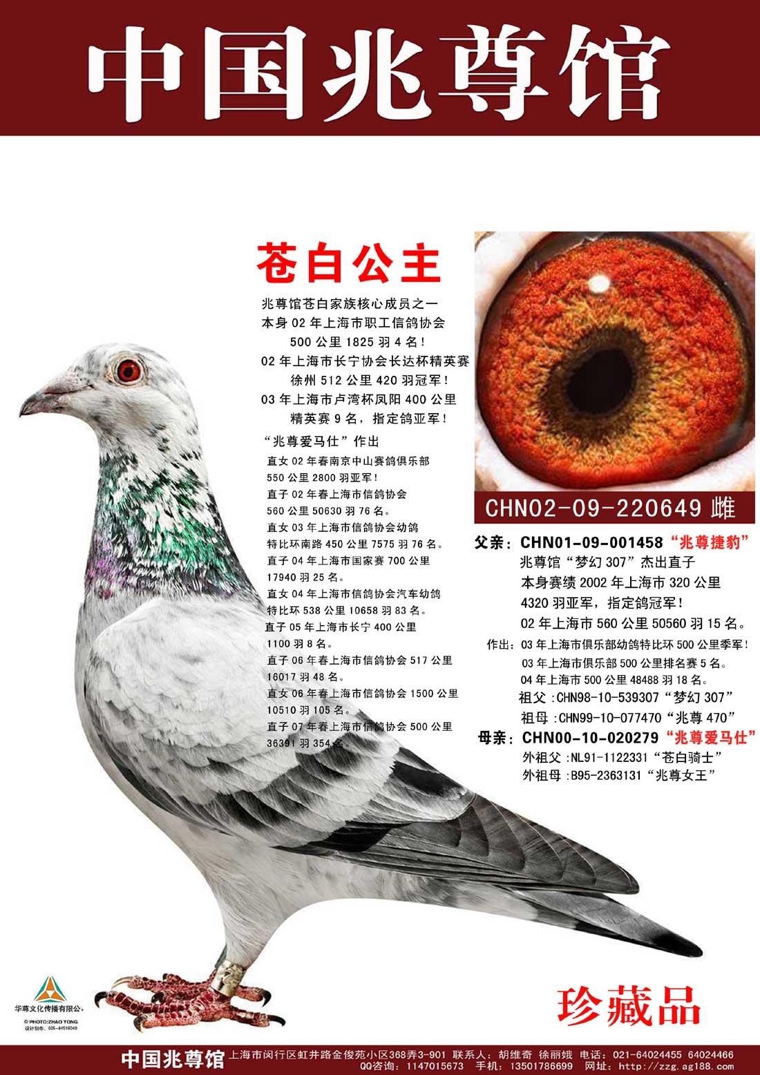 苍白公主【兆尊馆・苍白骑士标杆直女作出】