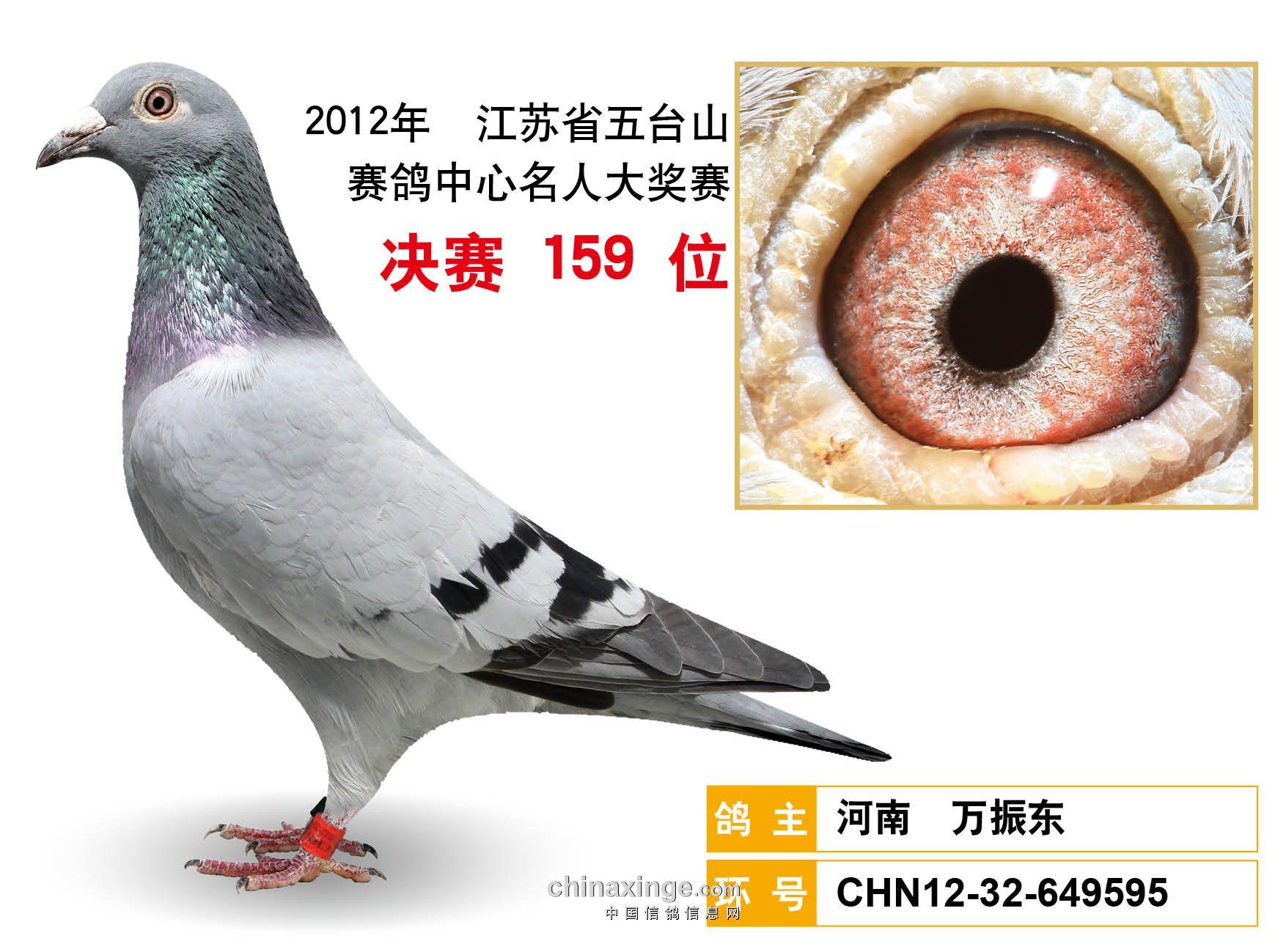 2012年五台山公棚获奖鸽