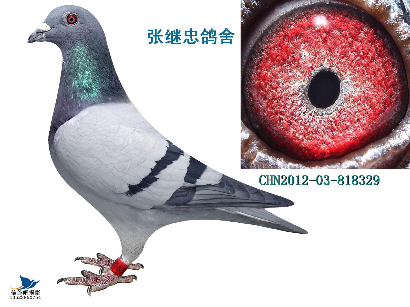 天鹿冠军直子-818329