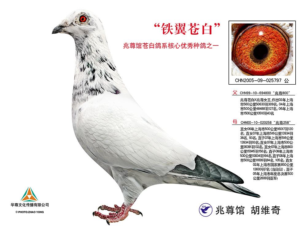 铁翼苍白【苍白骑士标杆直子x直女作出】