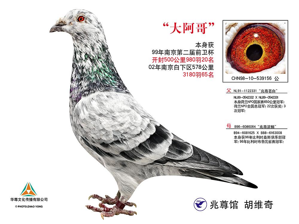 大阿哥【兆尊馆・苍白骑士标杆直子】