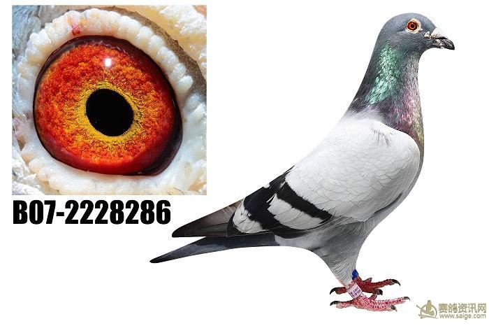 菲利浦286