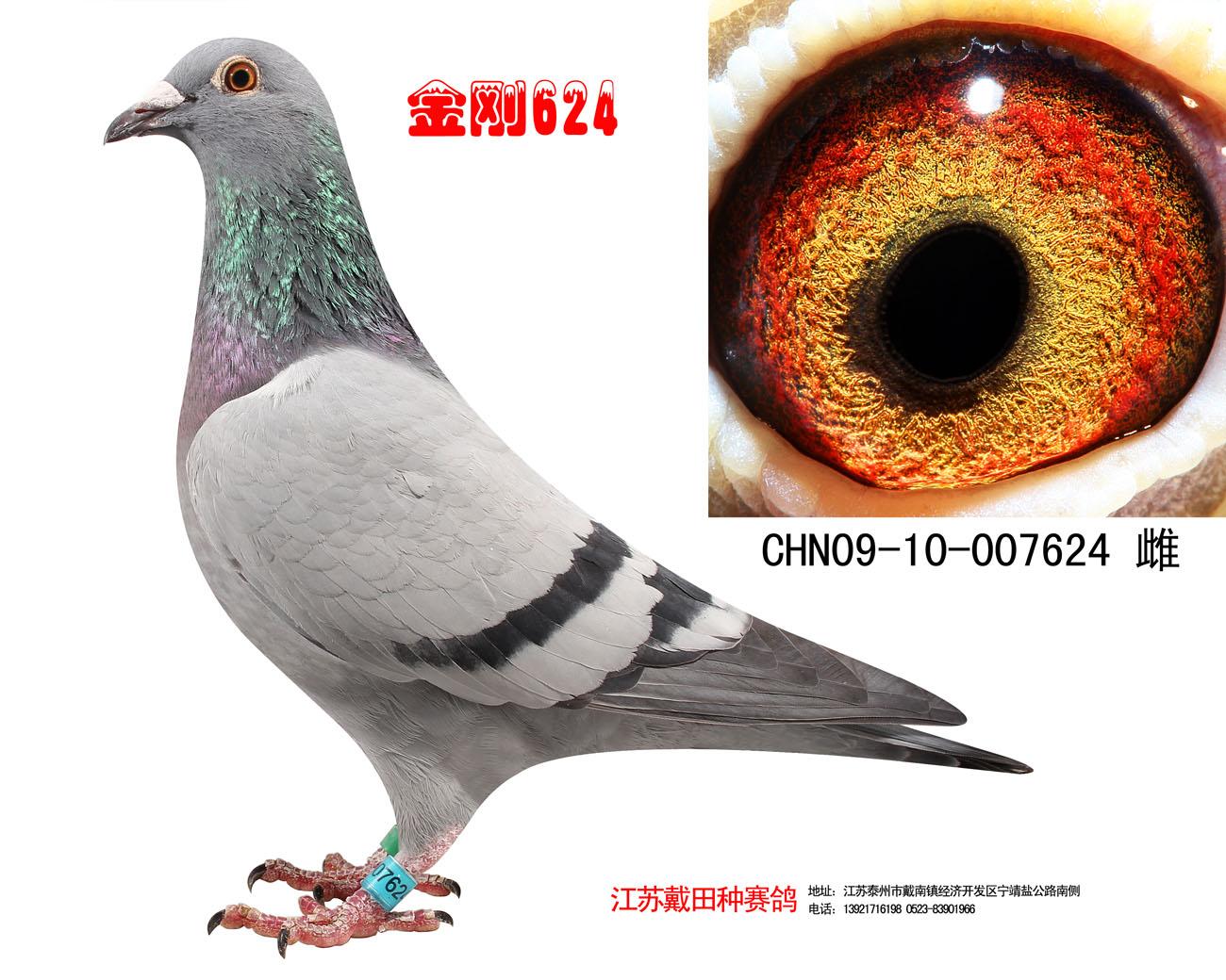 金刚624