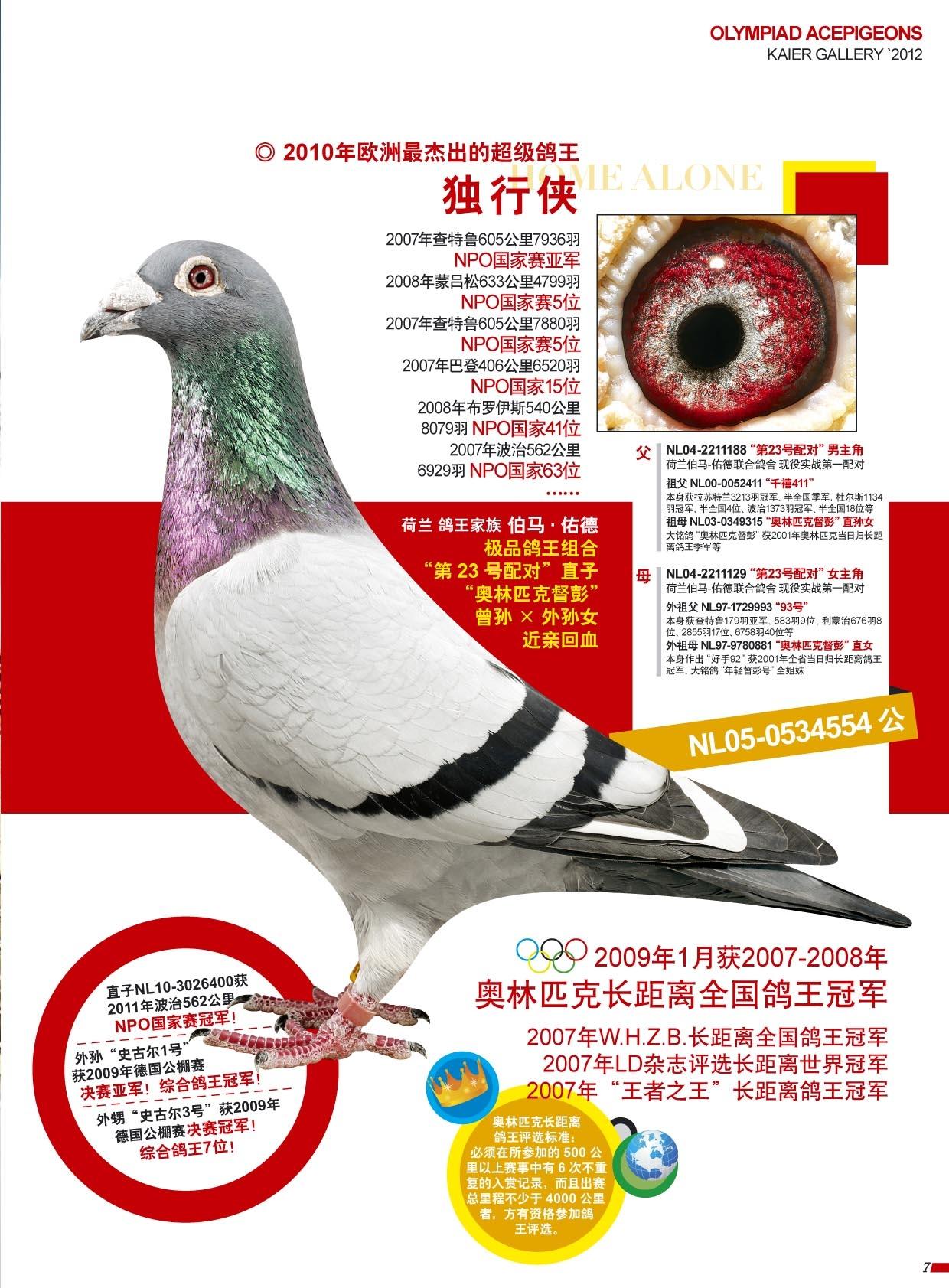 【独行侠】:世界鸽王冠军!