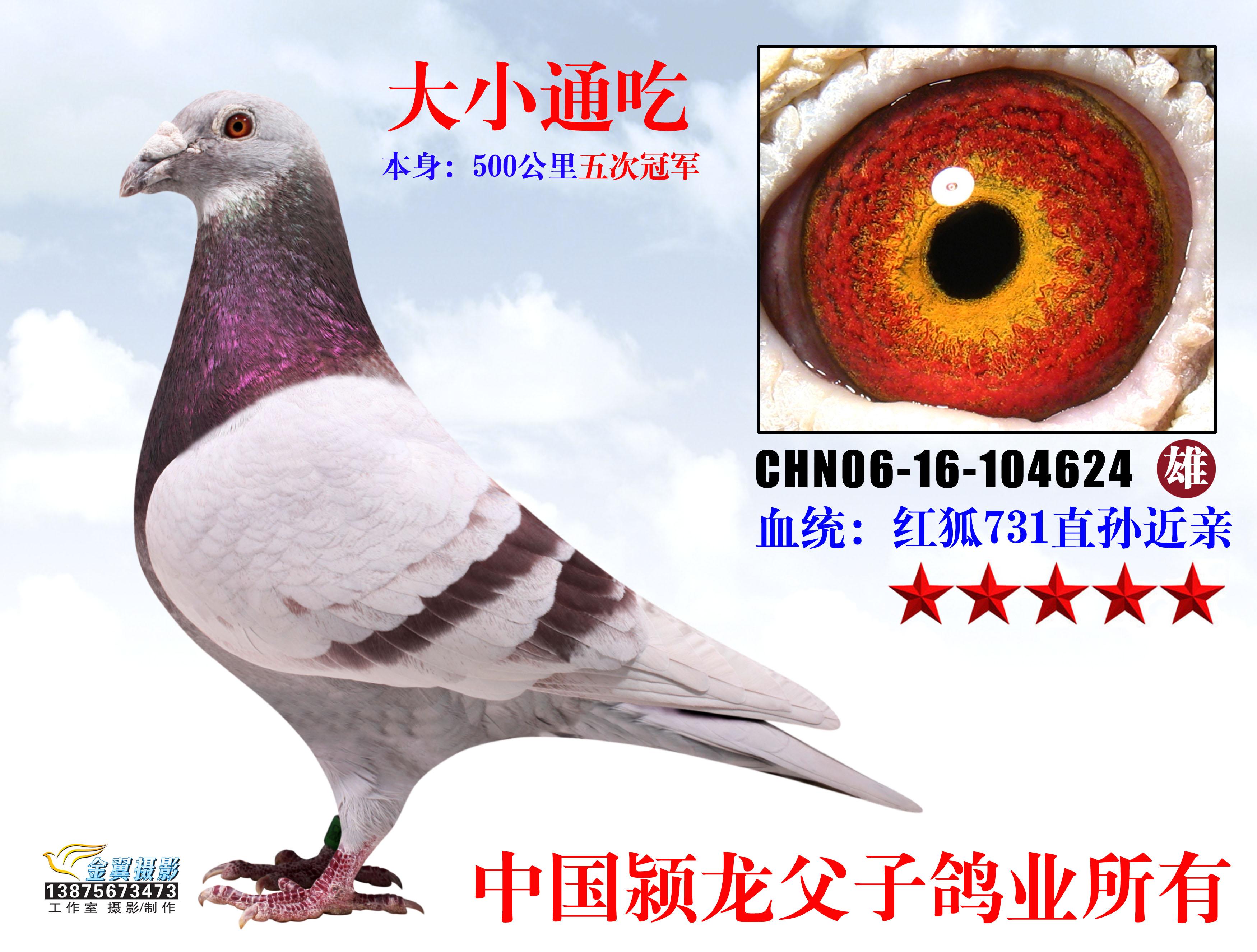 蜜蜂鸽鸽子鸟类不会鸟教学3500_2651小动物的人为何图示癌症图片