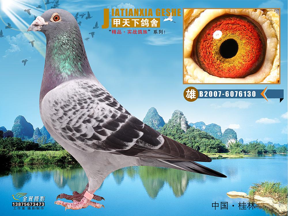 动物 鸽 鸽子 教学图示 鸟 鸟类 1000_750