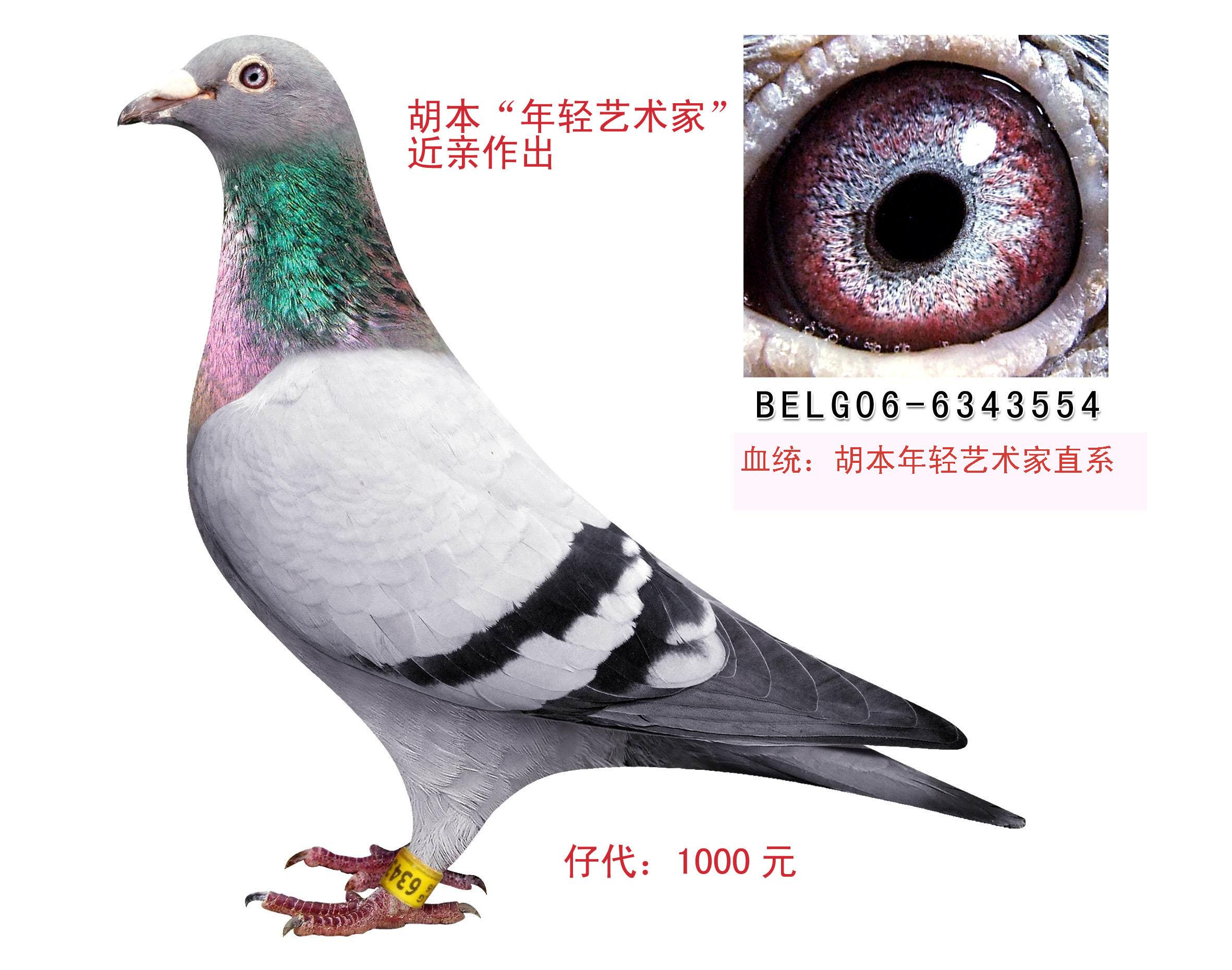 胡本554