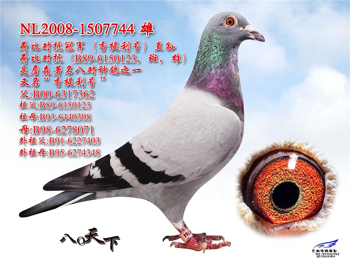 威力金字塔联合鸽舍-中信网爱