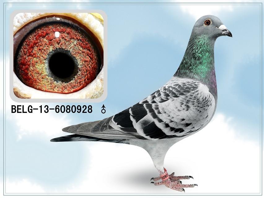 2米到2.5米鸽棚设计图