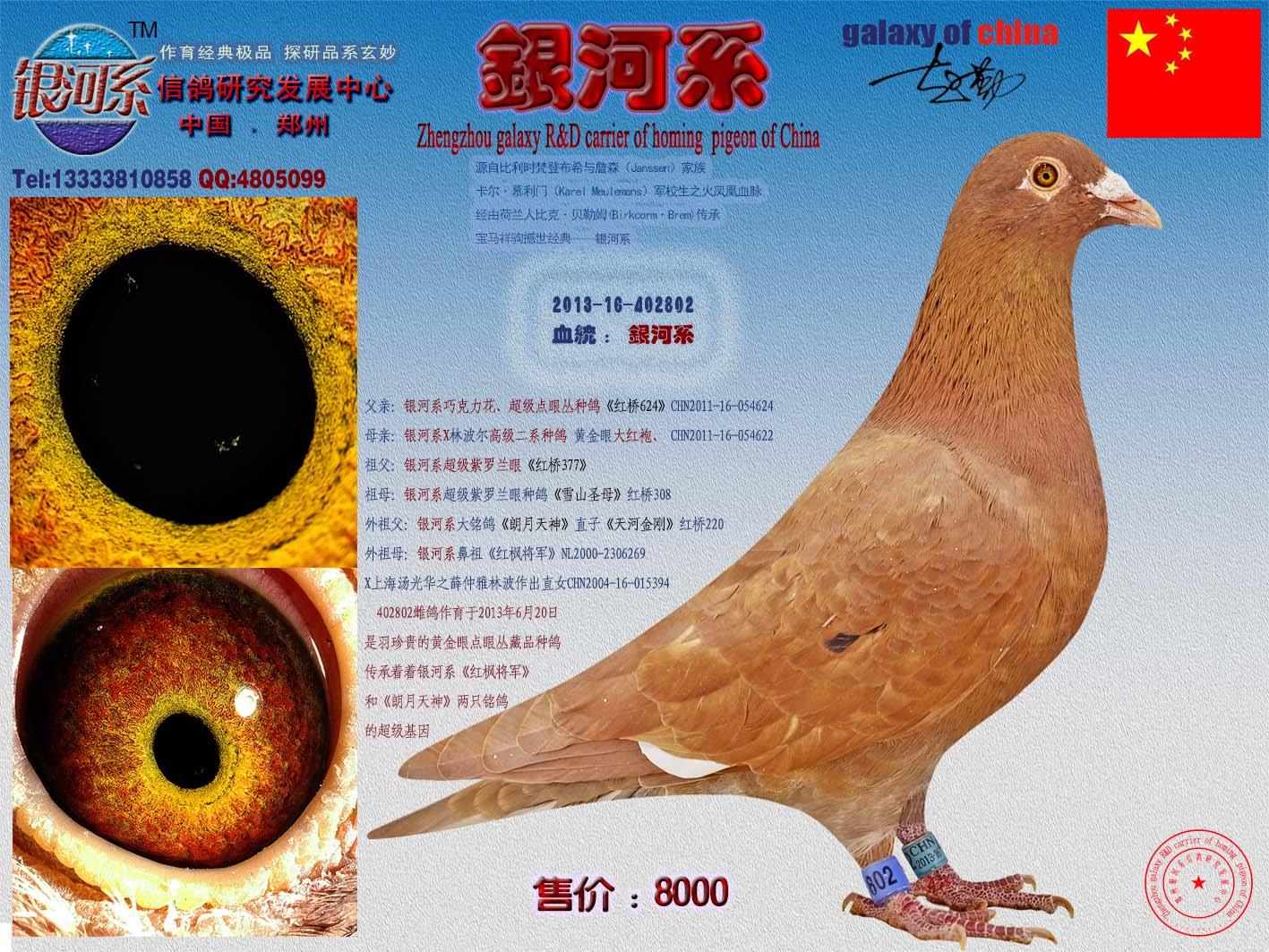 鹦鹉鸽动物鸟类图示鸟鸽子1417_1063教学鱼v鹦鹉图片