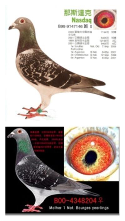 鸽子内脏部位结构图