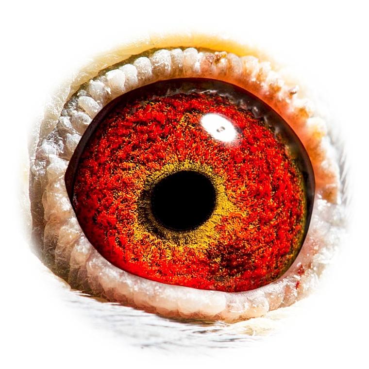 眼睛骨骼结构图
