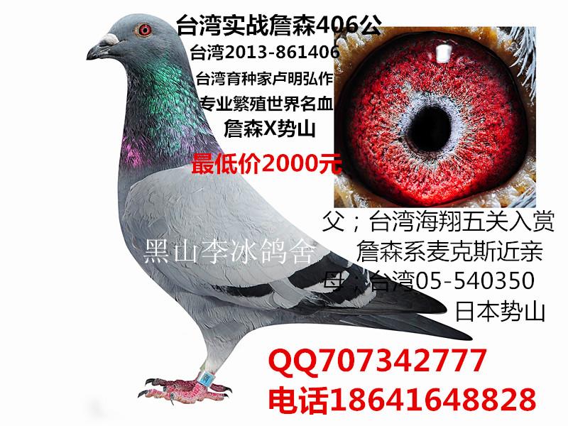 出售台湾名家种鸽_黑山李冰鸽舍_ag188.com爱鸽商