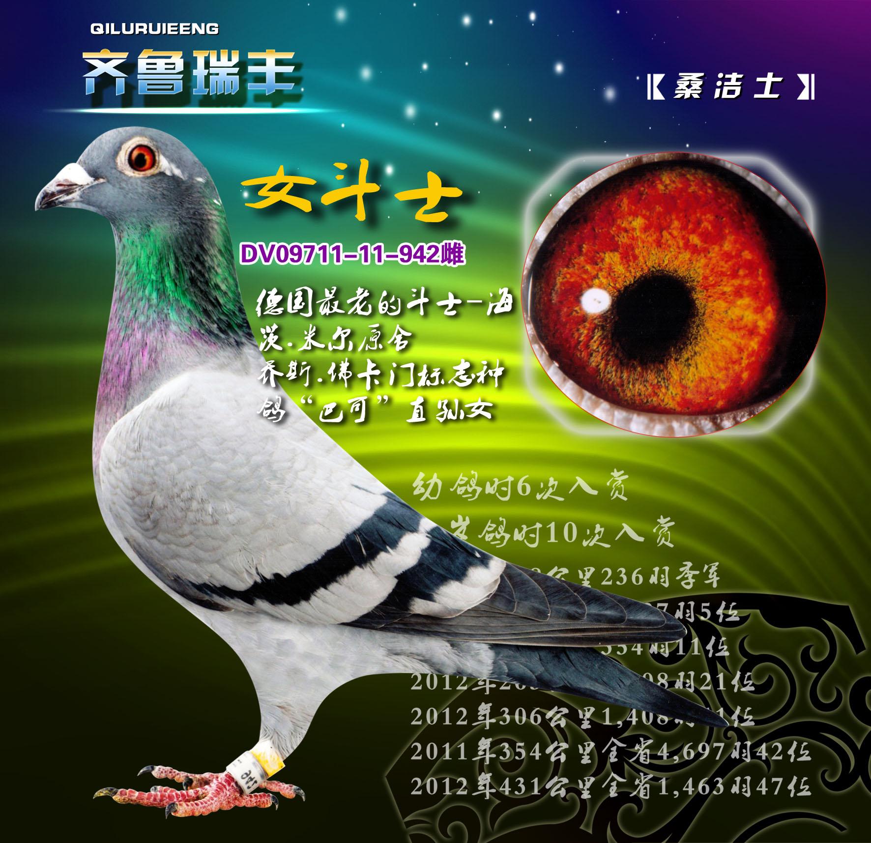 动物 鸽 鸽子 教学图示 鸟 鸟类 1772_1715