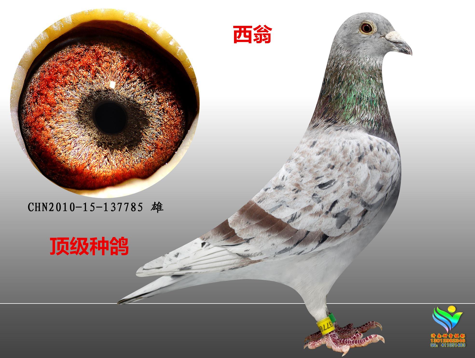 聚宝盆_大成鸽业_ ag188
