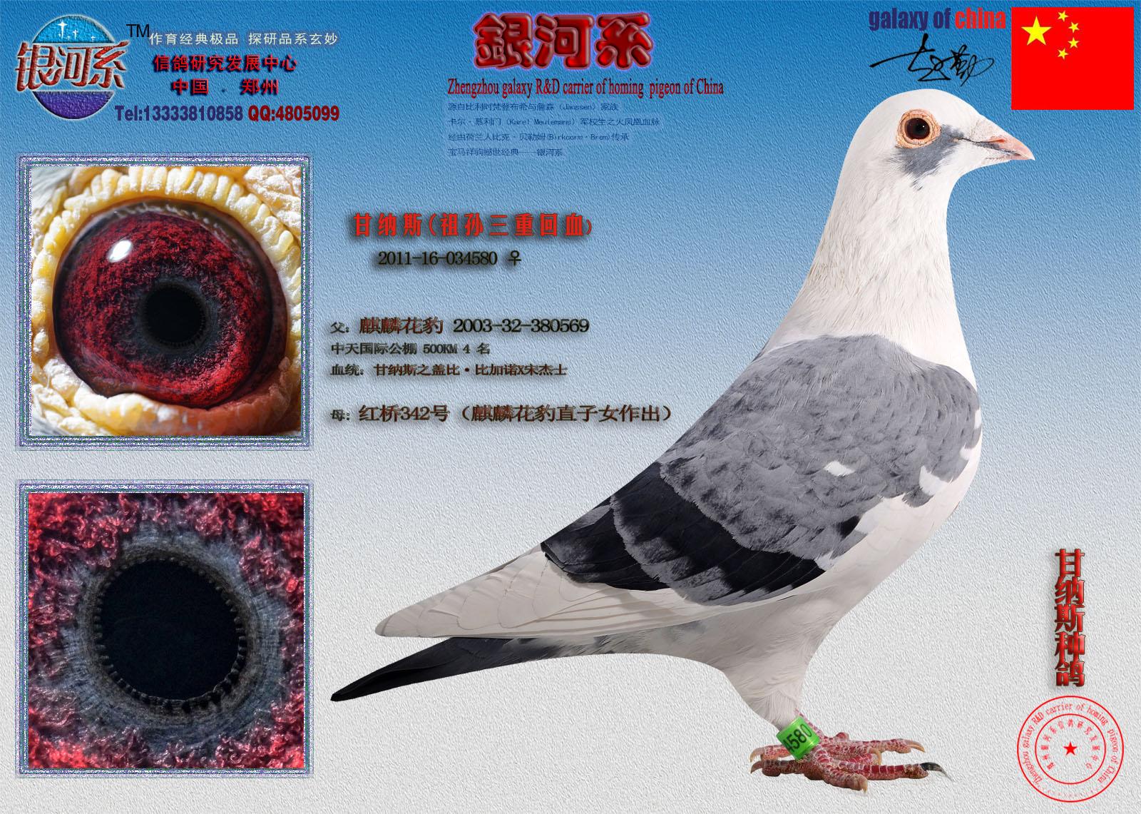 相关图片 眼睛大图 眼志与内线口大图 信鸽特征 &nbsp