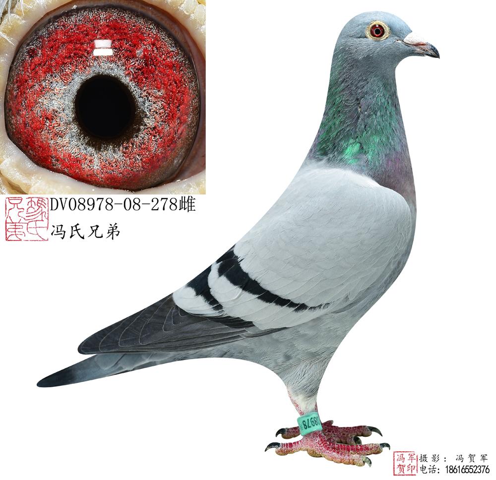 冯氏上龙 - 标签 - ZNDS智能电视网 - 手机版