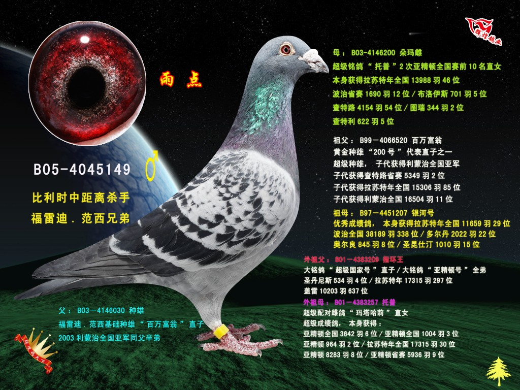 雨点雄 辉煌国际赛鸽交流中心图片