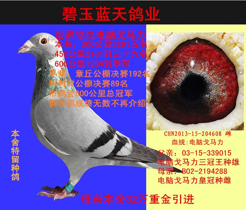 蓝天信鸽背景素材