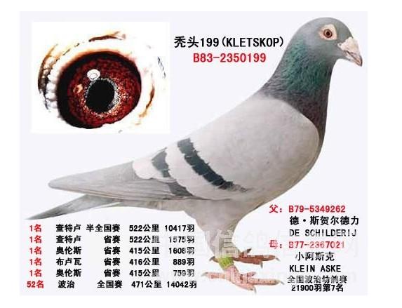 世界大铭鸽199_山东欣固鸽业_ ag188.com爱