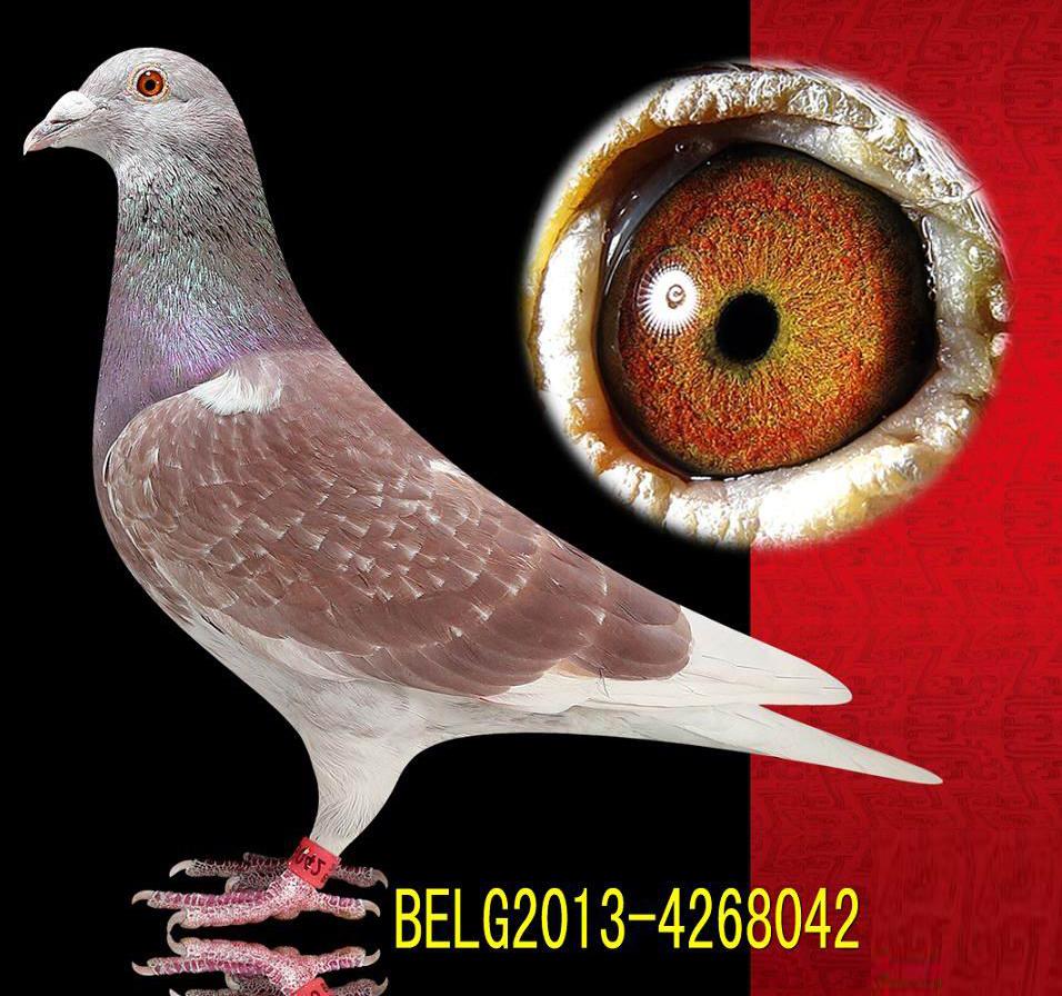 动物 鸽 鸽子 教学图示 鸟 鸟类 956_896