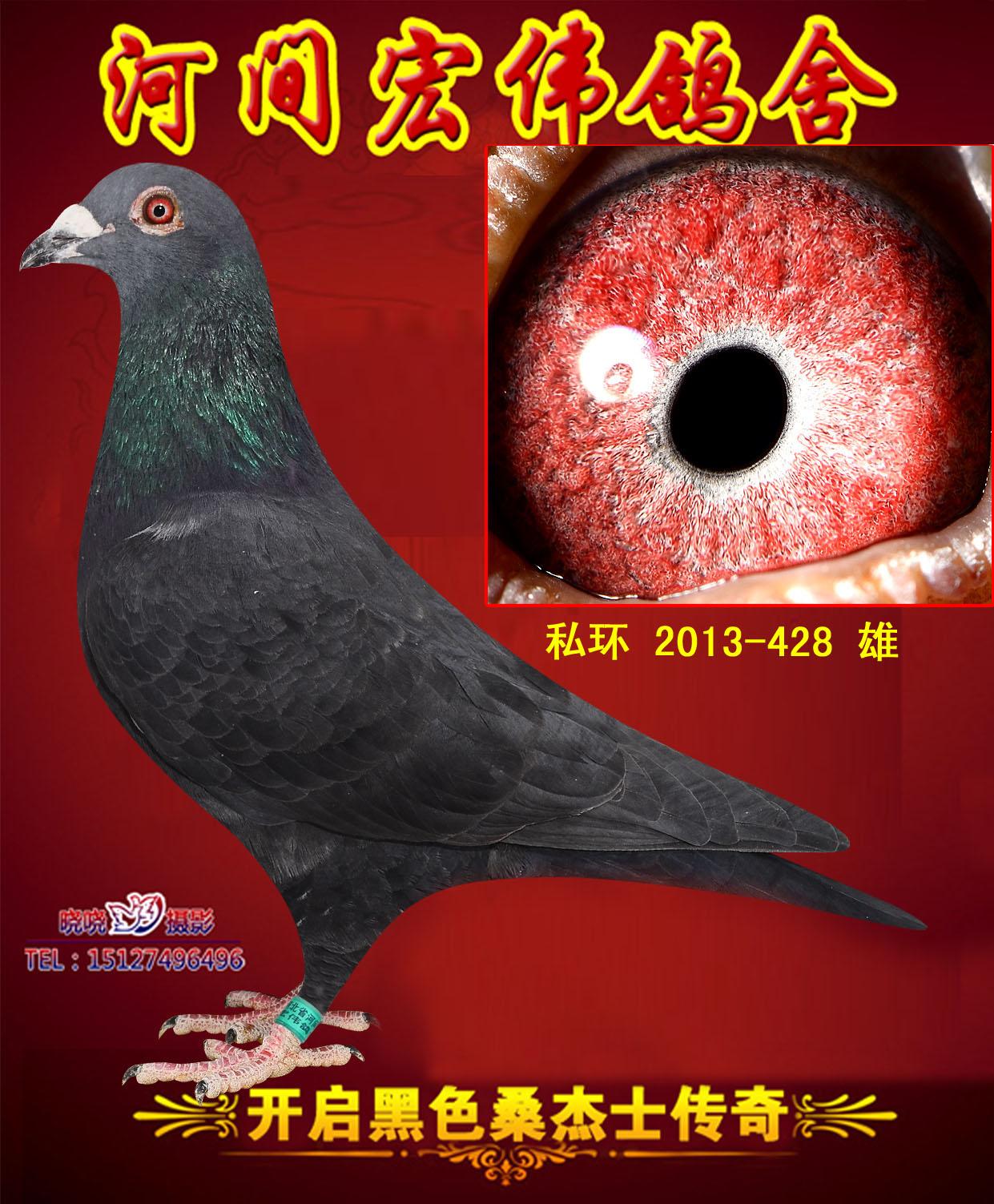 中华信鸽拍卖信息网