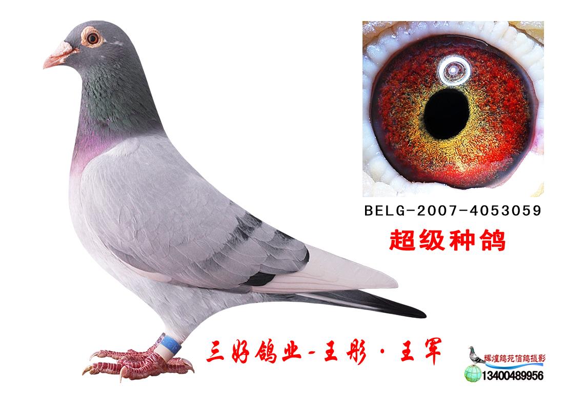 原环极品-桑杰士3059