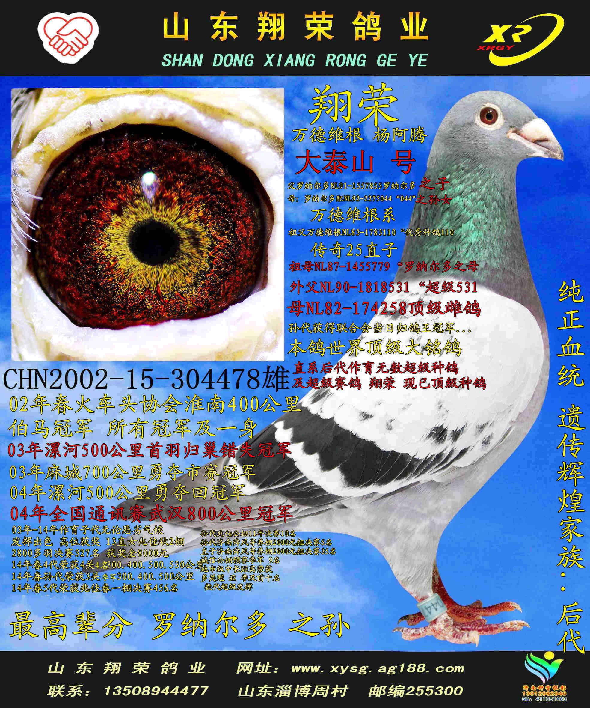 万德维根 大泰山 号_山东翔荣鸽业_ ag188.com