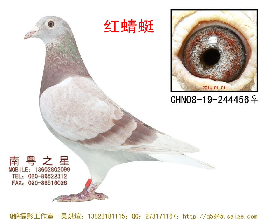 """""""红蜻蜓""""直女四关四方向综合冠军(非卖品"""