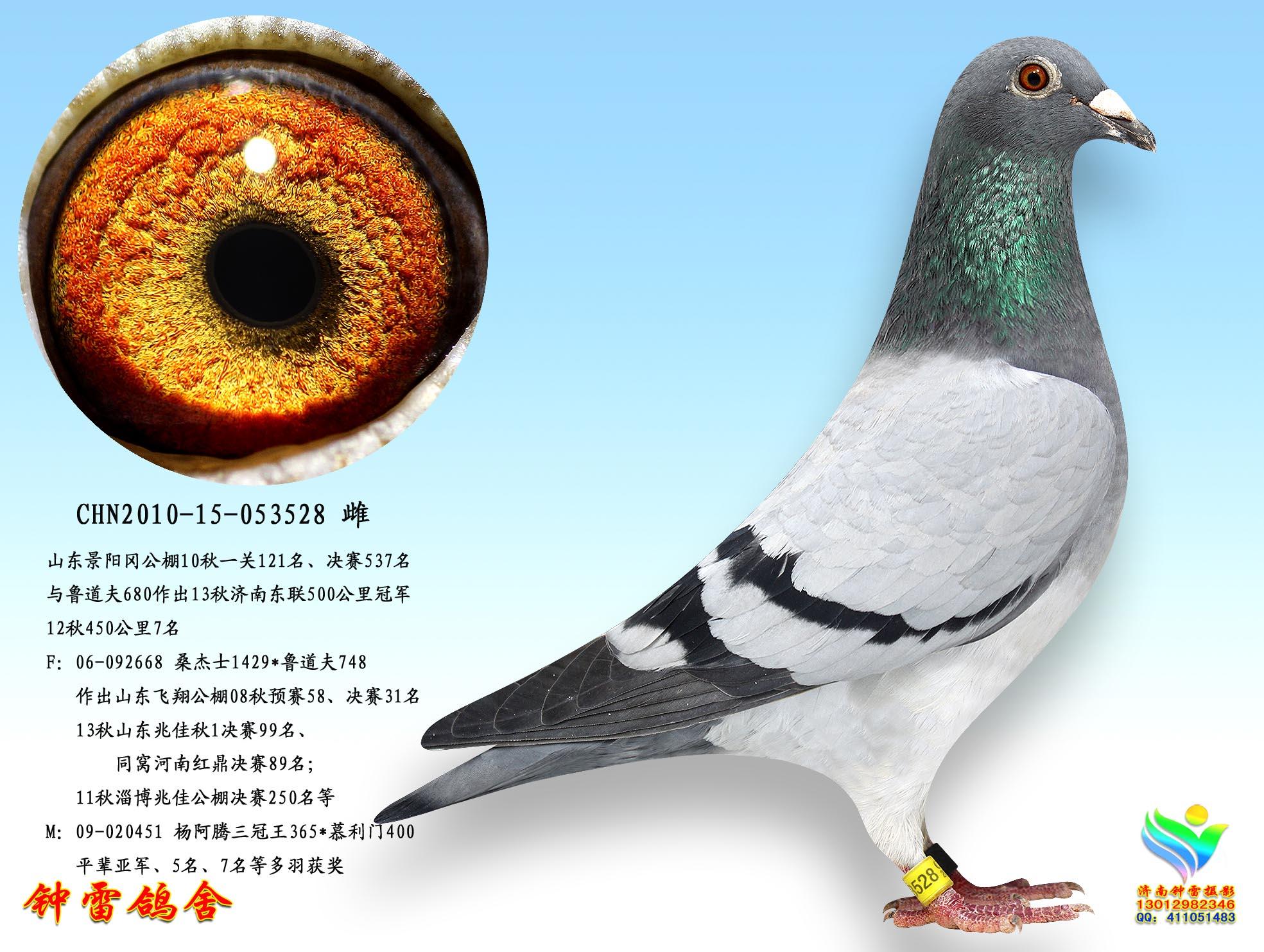 动物与食物配对图片