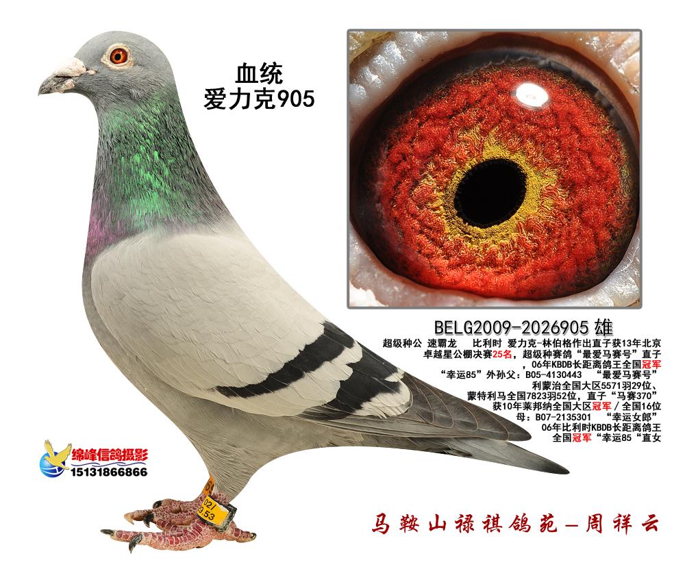"""速霸龙""""最爱马赛号""""直子""""爱力克905"""""""