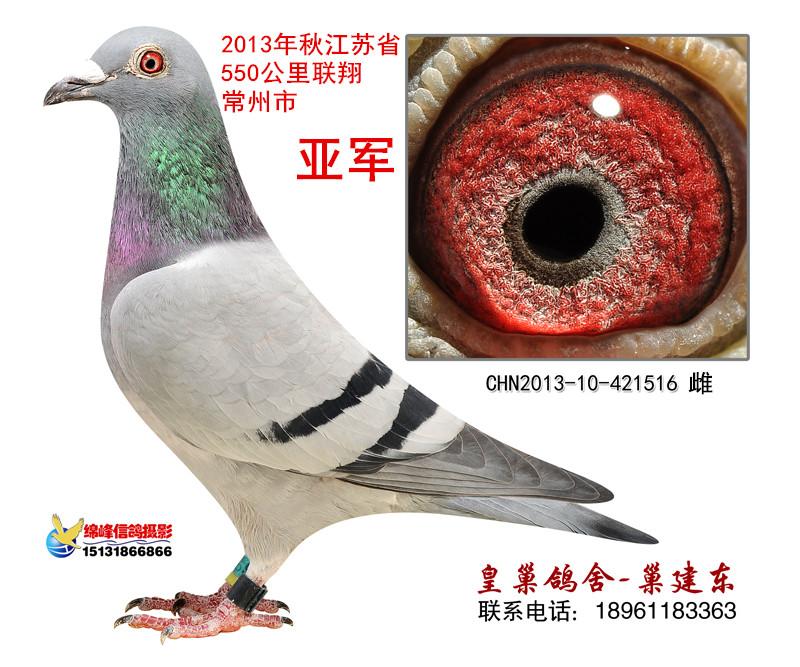 江苏省联翔亚军