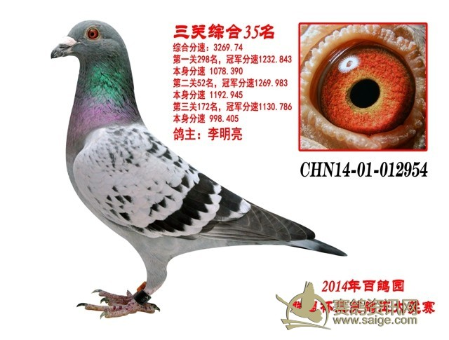 北京百鸽园联盟杯三关鸽王35名