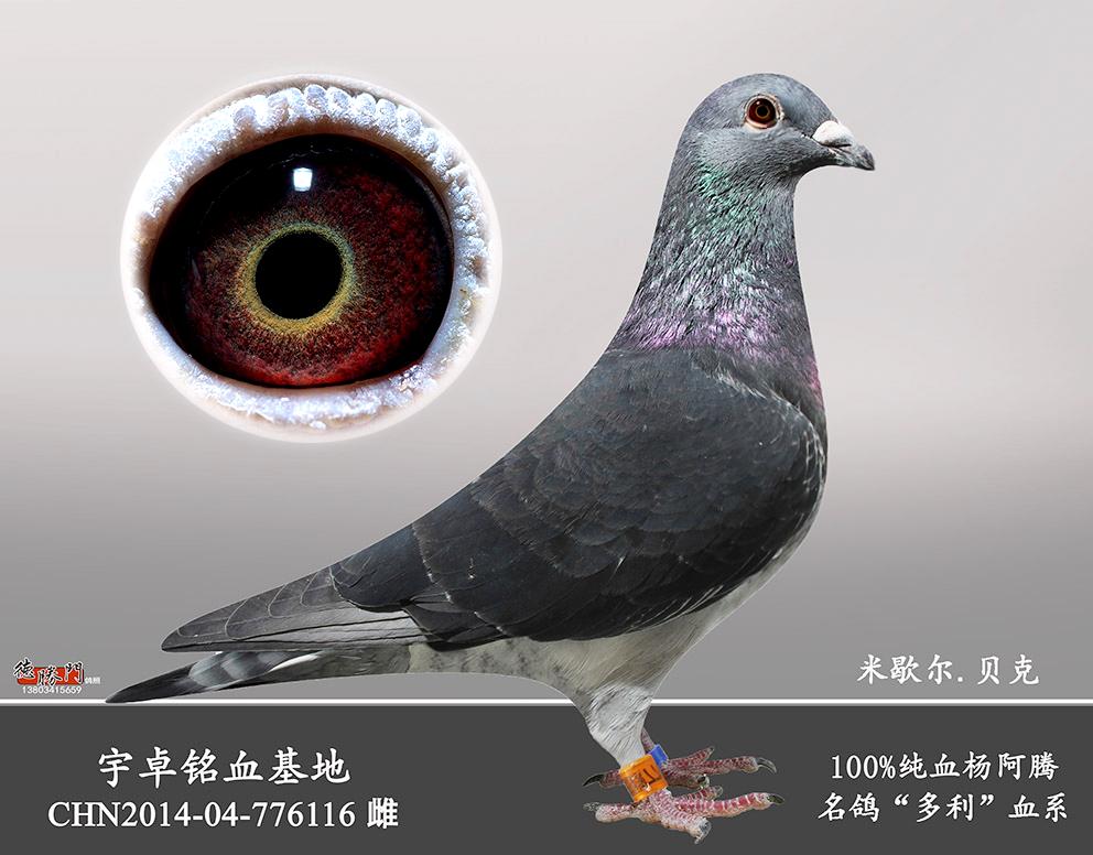 CHN2014-04-776116已售