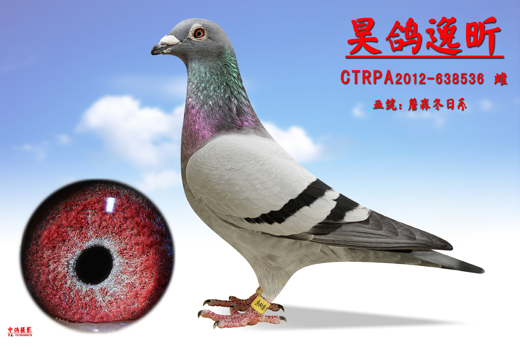 帝王动物谜语图片