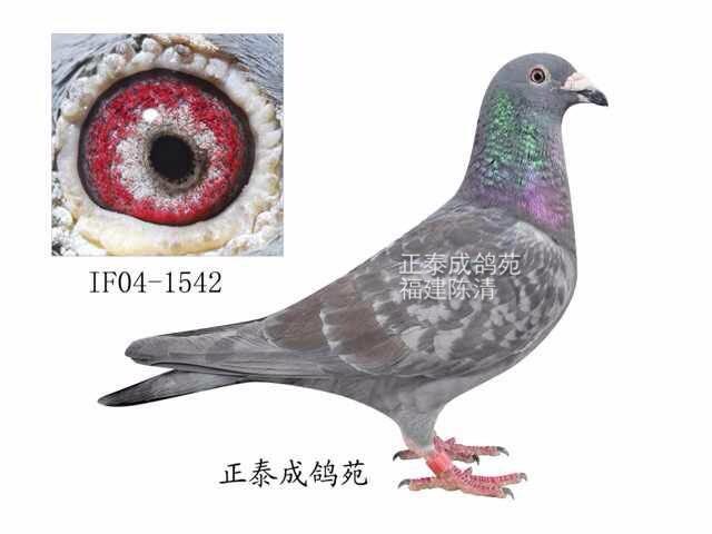冯莱尔IF04-1542