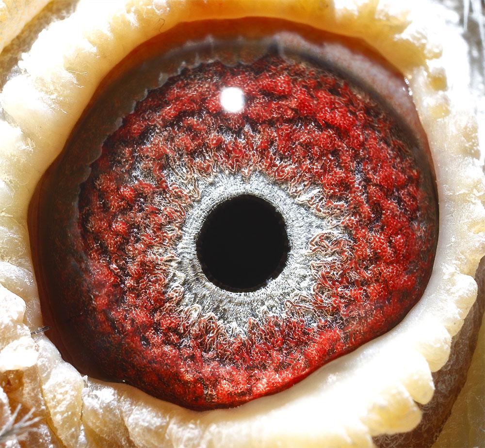 天蝎座眼睛