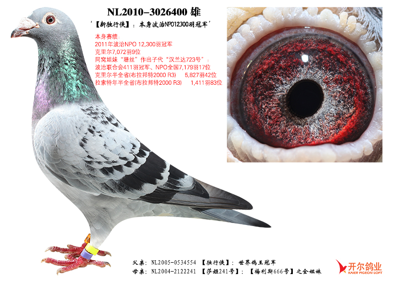 【新独行侠】:波治NPO全国万羽冠军!