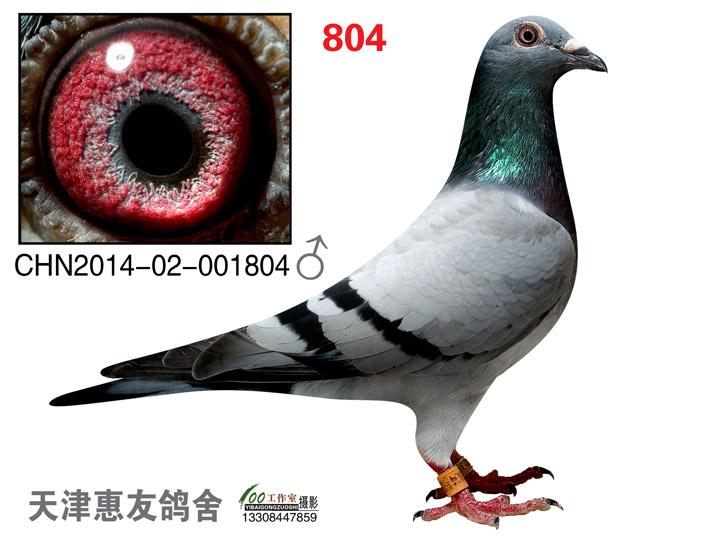 种雄1804