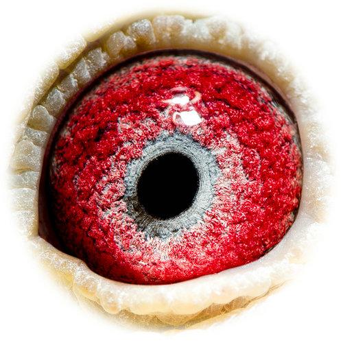 眼睛红血丝图片素材
