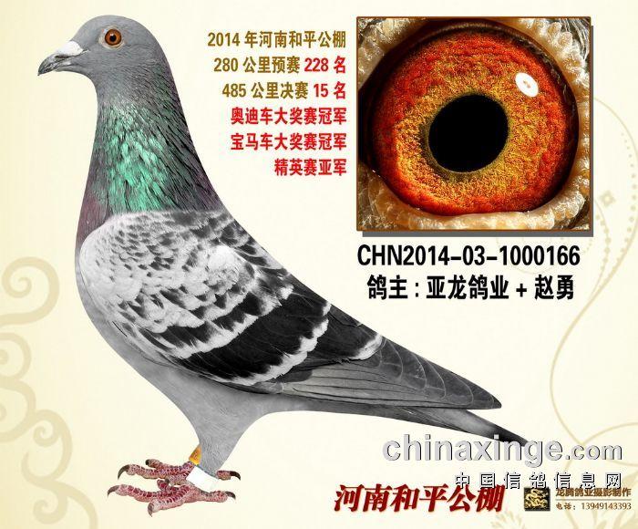 亚龙鸽业-双关鸽王-荣获:宝马、奥迪车
