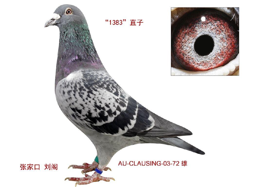 黑鹰低音炮接线图