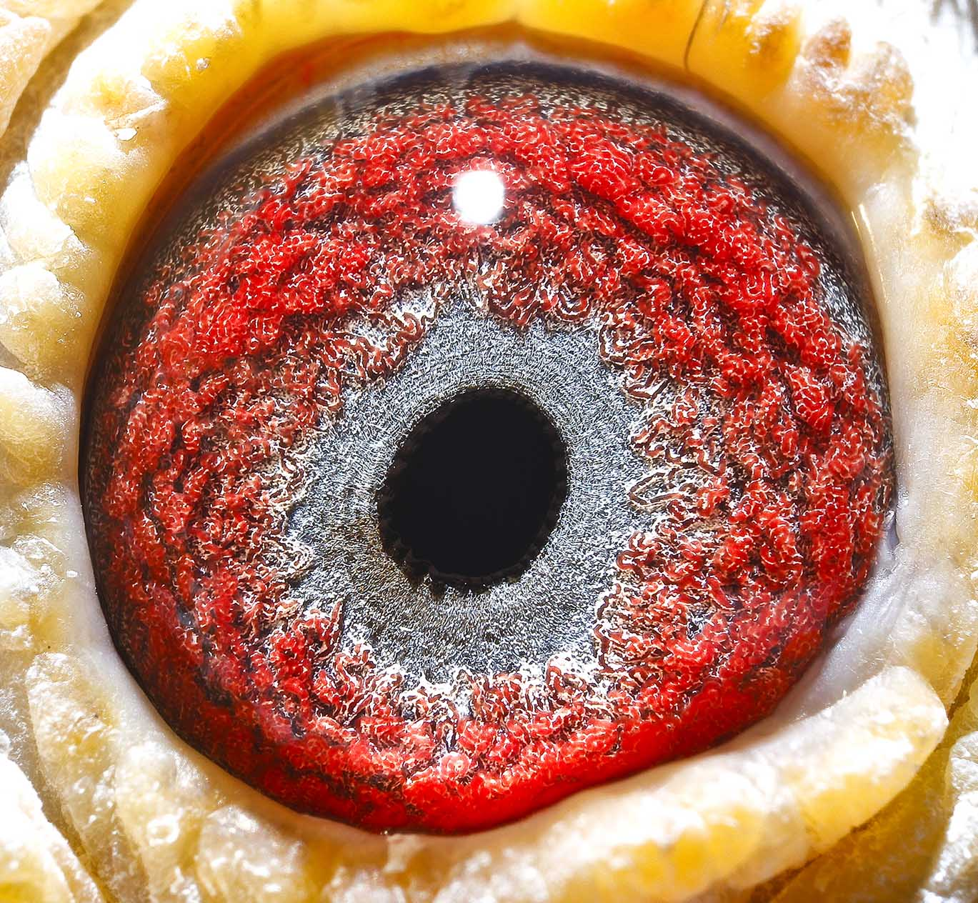 双鱼座眼睛