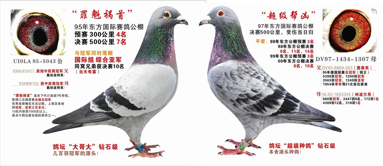 """戴扶连特""""罪魁祸首""""*""""超级帮凶""""(纪念"""