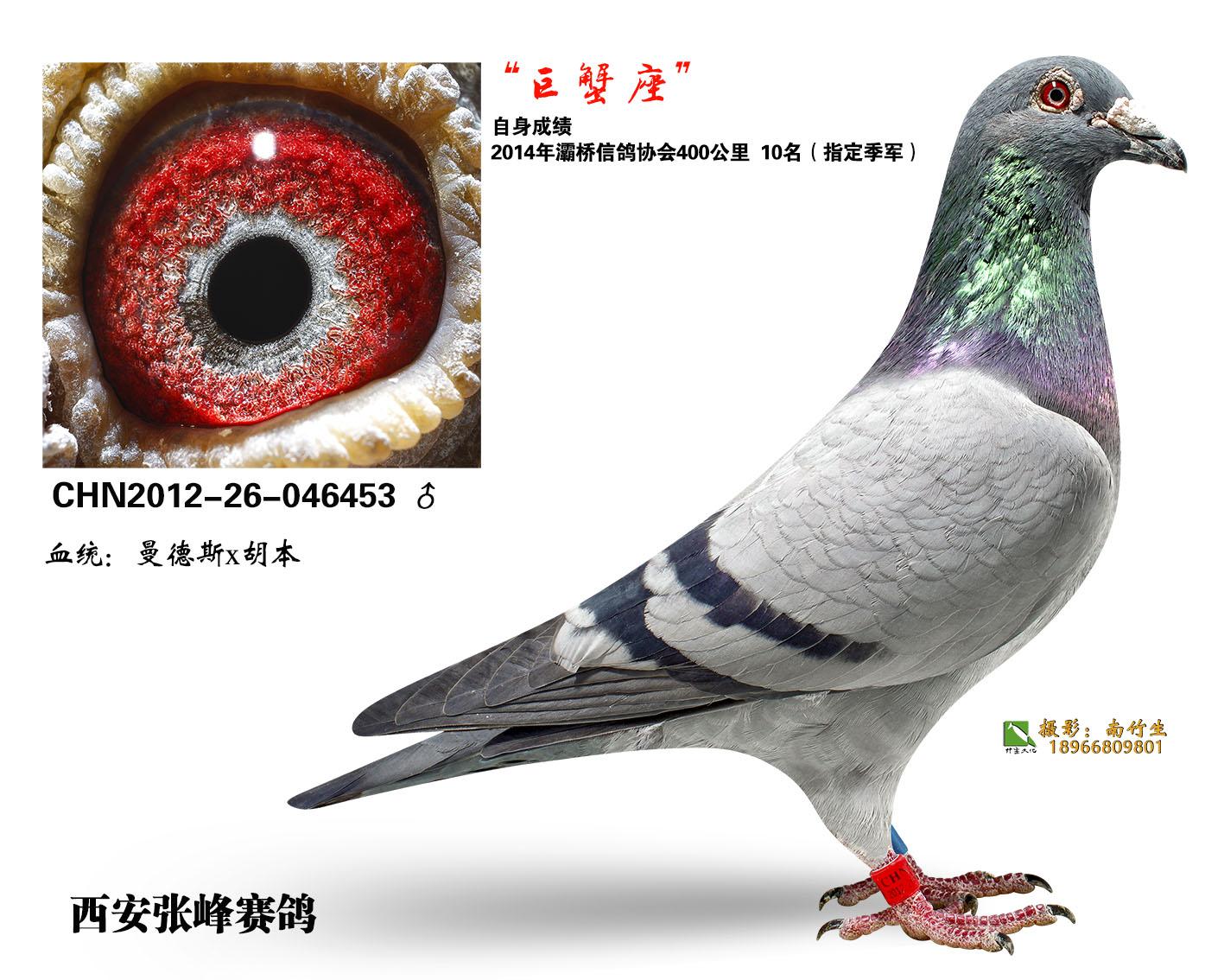 巨蟹座(非卖品)