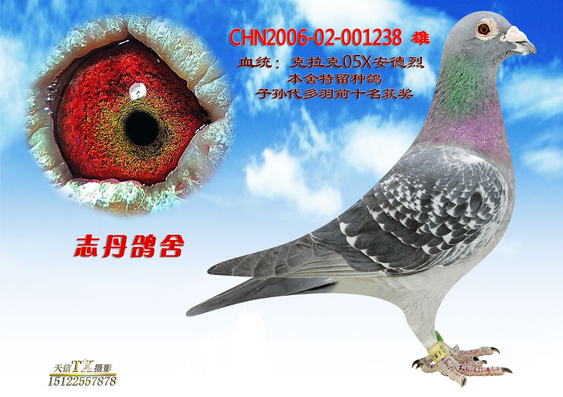 兔子鸽鸟类教学图示鸟鸽子1100_776作文动物乌龟的童话故事400字狮子图片