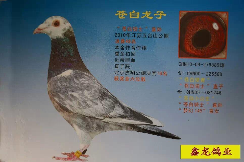 动物 鸽 鸽子 教学图示 鸟 鸟类 966_640