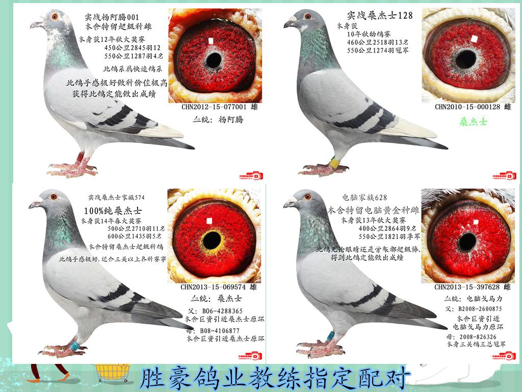动物及食物配对图片